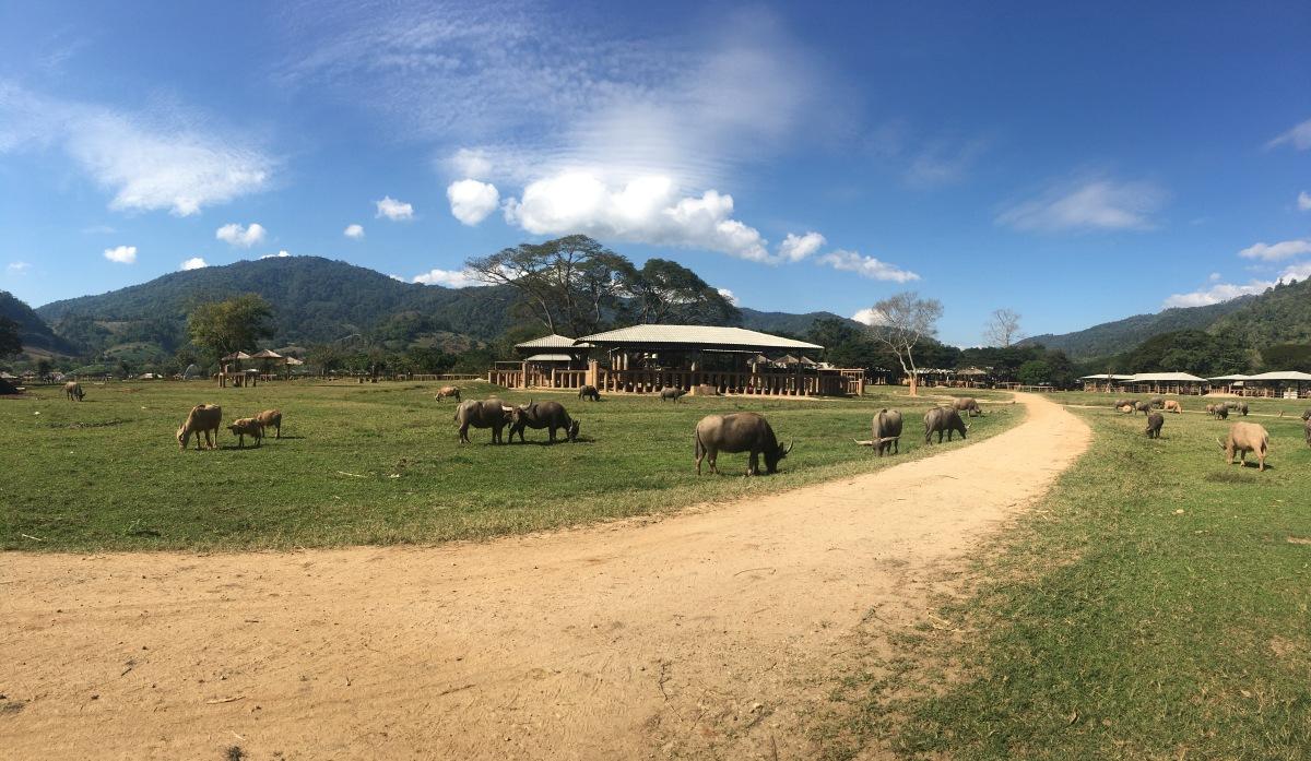 Elephant industry inThailand